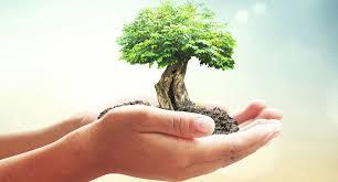 Tree Plantation - Chennai Site